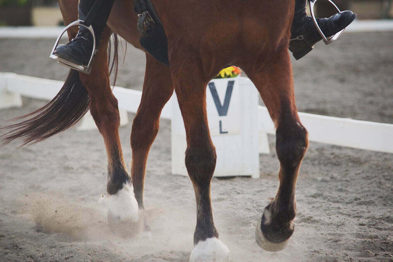 Equestrian Center Dettaglio Cavallo Trotto